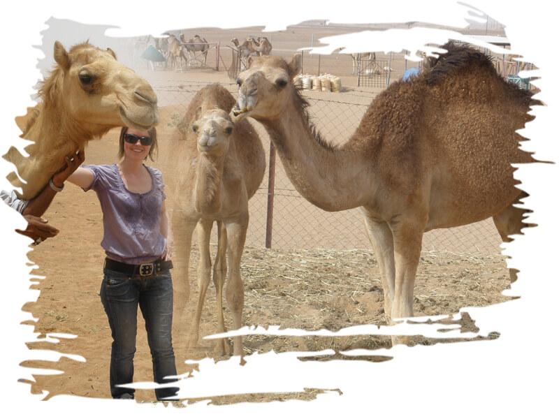 Camel ride-camel farm visit, camel farm dubai, camel farm tour, camel farm near dubai