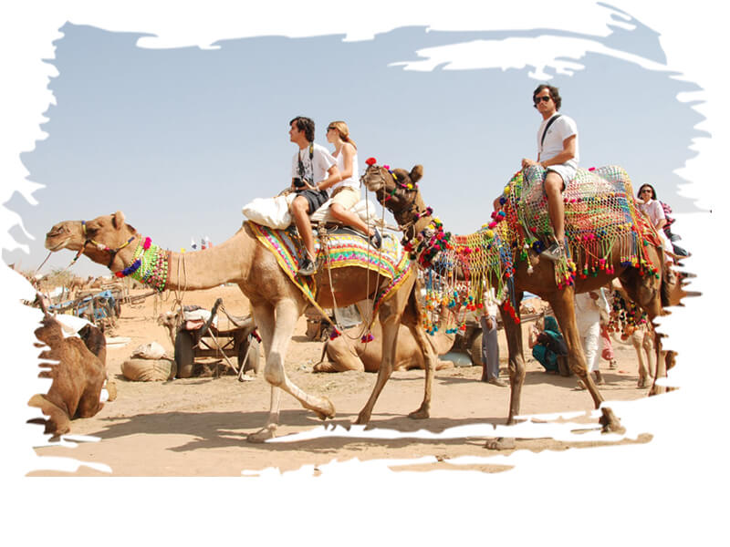 One hour camel ride tour safari, camel riding dubai, Camel trek, camel trekking