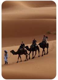 camel-safari-ride-tour-accross-desert-dubai, camel riding experience