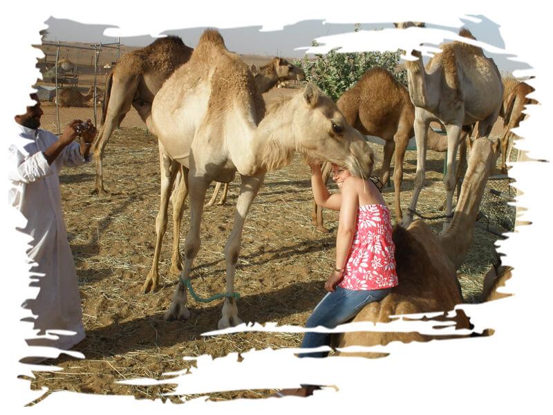 Camel Farm Tour, dubai-camel-farm-visit-tour, dubai camel safari, dubai camel farm tour cost-price