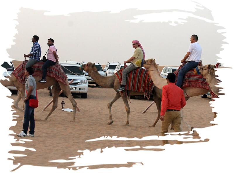 dubai camel ride tours, dubai camel trek, day tour camel, camel desert tour