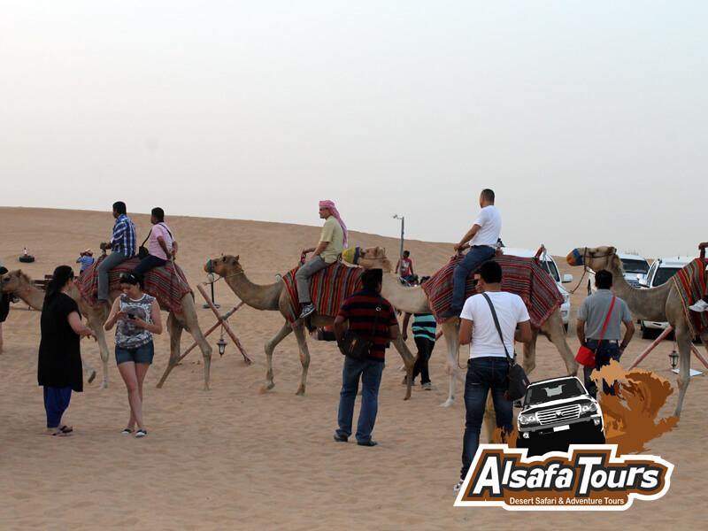 Camel Trekking Safari in Dubai Sharjah Al Ain Abu Dhabi UAE, Camel trekking price